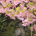 Photos: 葉桜の下