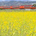 Odakyu Hyper Yellow Spring