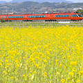 Photos: Odakyu Hyper Yellow Spring