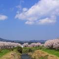 穏やかな春の日