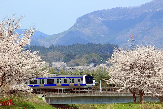 お花見電車