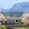 Photos: お花見電車