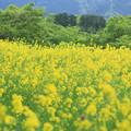 Photos: Yellow & Green