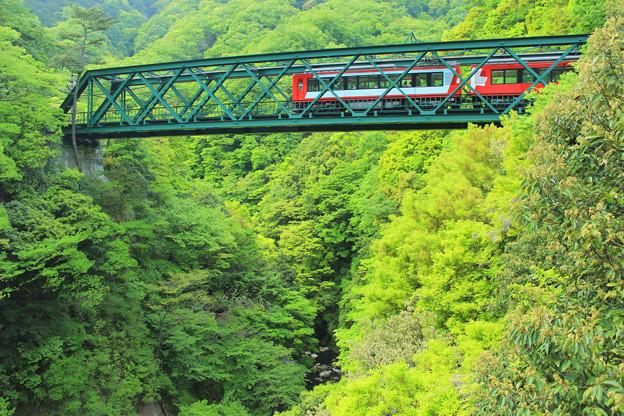 新緑渡る登山電車