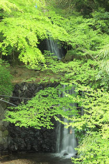 Photos: 初夏の涼