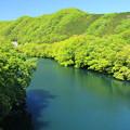 Photos: 萌ゆる山