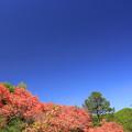 Photos: ツツジのお山