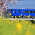 Photos: Pink,Yellow & Blue