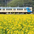 花咲く鉄路