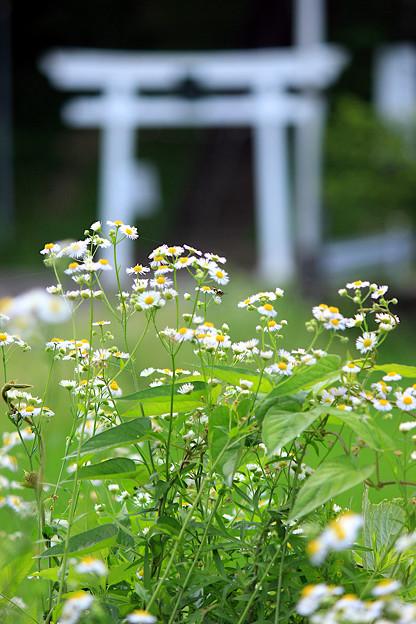 ふるさと村に咲く花