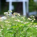 Photos: ふるさと村に咲く花