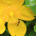 Photos: Sweet Honey
