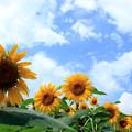 Photos: Feel The Summer