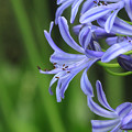 Photos: Purple Flower
