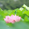 Photos: 聖者の花