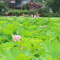 いにしへの花