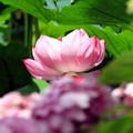 初夏花の共演