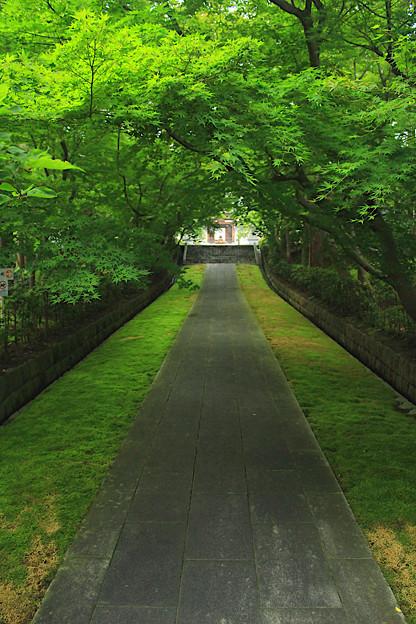 深緑の参道