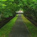 Photos: 深緑の参道