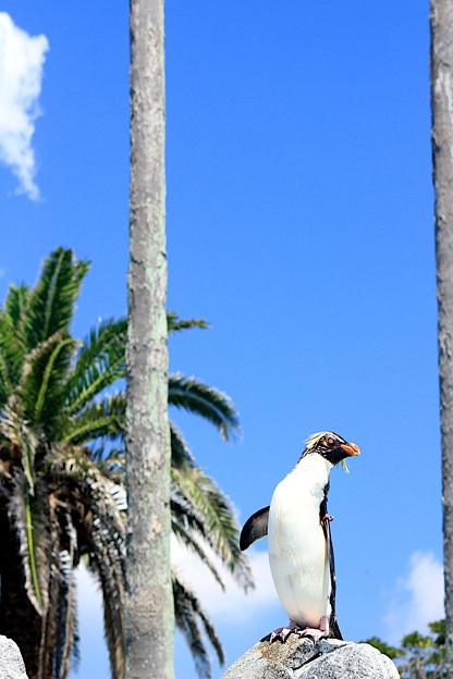 Summer Penguin