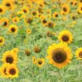 Photos: Sun Smile
