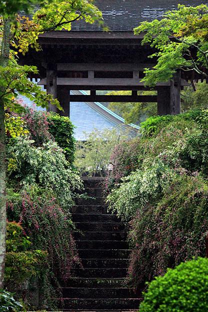 萩咲く山門