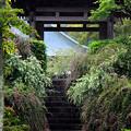 Photos: 萩咲く山門