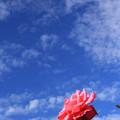 ハマの秋バラ