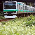 Photos: お蕎麦電車