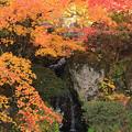 Photos: 庭園の彩り
