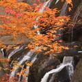 Photos: Autumn Fall