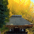 Photos: 秋の山門