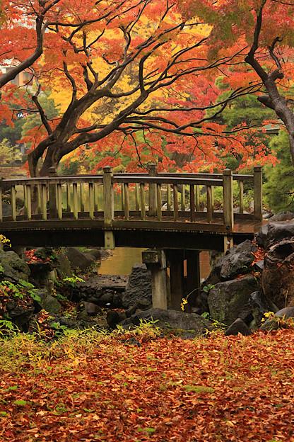 Photos: 彩り橋