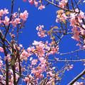 Photos: 房州早春