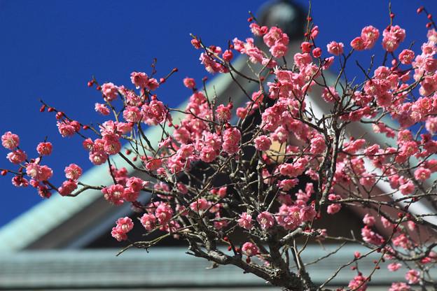 Photos: 春きたる