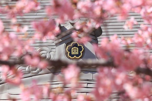 ファンシー寺紋