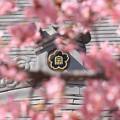 Photos: ファンシー寺紋