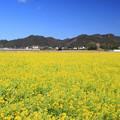 Photos: 房総の春