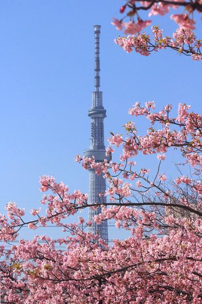 花咲く東京