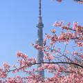 Photos: 花咲く東京