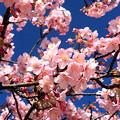 Photos: 春燦々