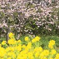 春のコントラスト