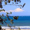 富士の見える渚
