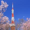 Pinkish Tokio