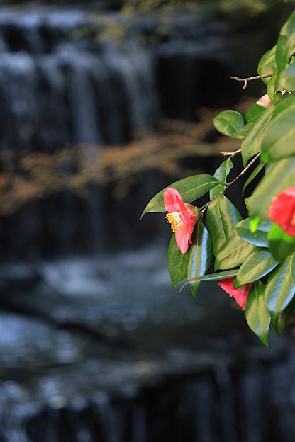 人知れず咲く花