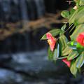Photos: 人知れず咲く花
