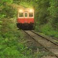 Photos: 緑のトンネルの向うから