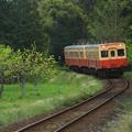 Photos: 里山列車