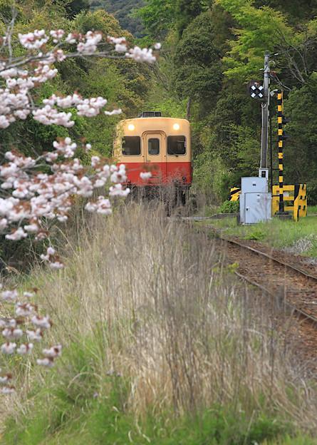 Photos: 名残り桜