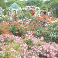 思ひ出の花園